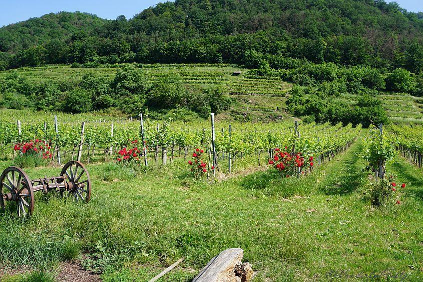 Lebensfreude pur – oben ohne durch die Wachau