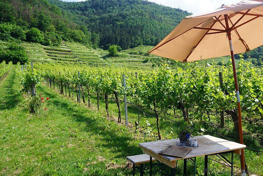 Weinheuriger in der Wachau
