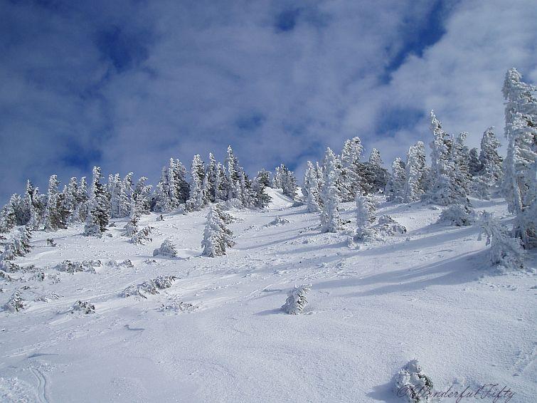 Winter - Schnee
