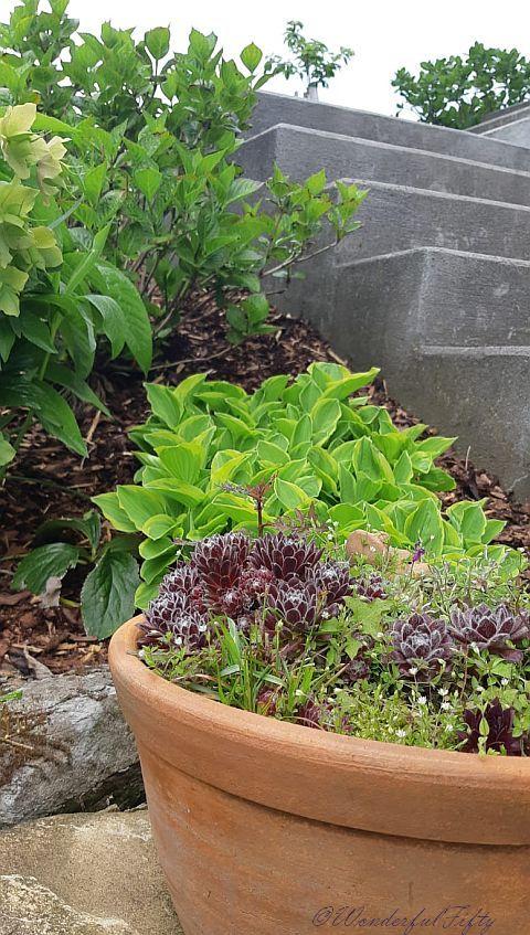 Pflanzen-Wonderfulfifty