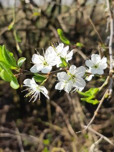 Blüten-Wonderfulfifty