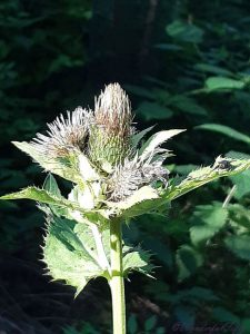 Distel-Wonderfulfifty