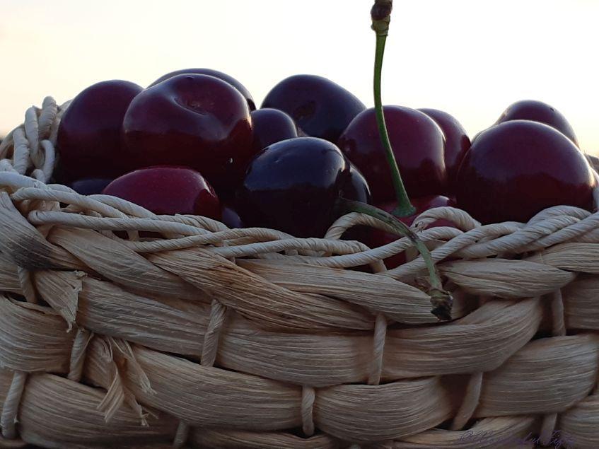 Juli-Special – Zeit der süßen Früchte