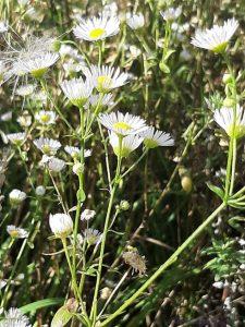 Herbstpflanze-Wonderfulfifty